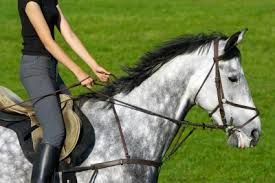 Horse riding is a very famous sport in Delhi that people of any age group can be participates.
