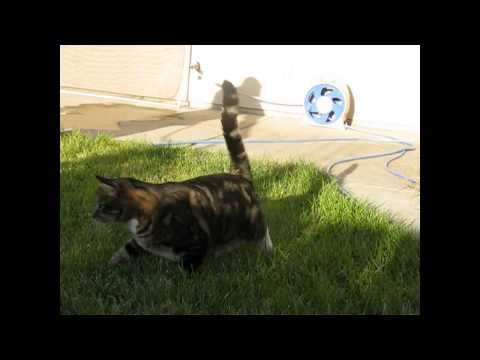 Funny cat videos 2016 - funny cat videos- try not to laugh - cat fails funny videos 2016 #36 - http://positivelifemagazine.com/funny-cat-videos-2016-funny-cat-videos-try-not-to-laugh-cat-fails-funny-videos-2016-36/ http://img.youtube.com/vi/STnjEx-ets8/0.jpg  Funny cat videos 2016 – funny cat videos 2016 – you can't stop laughing [part 1]. funny catsa compilation 2016 best funny cat videos ever – funny vines … ***Get your free domain and free s