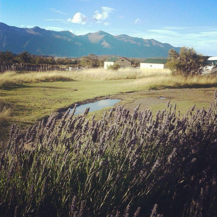 Calafate, Patagonia