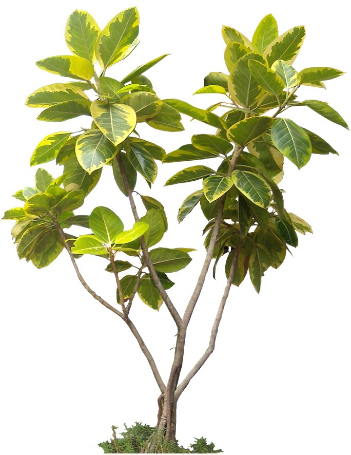 174 best PNG (Plants, Trees, People, Vehicles, Buildings ...