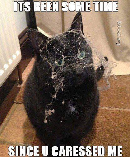 hahahaha yesss #catmeme #funnycat #funny #cat #meme #animal