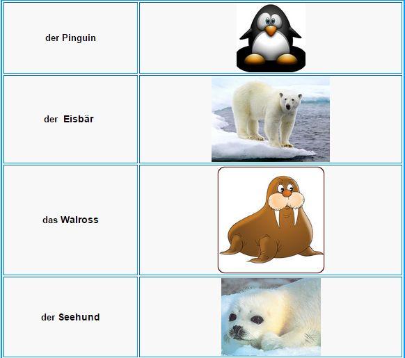 German Vocabulary - Animals | L E A R N G E R M A N