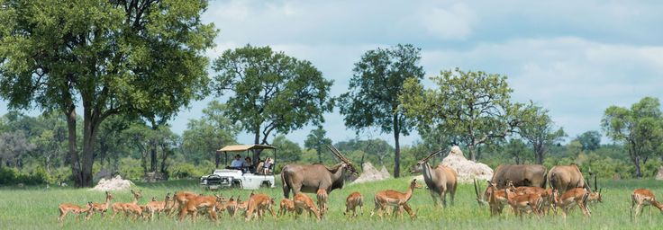 Summer game viewing is extraordinary at Davison's Camp, Hwange National Park, Zimbabwe | Wilderness Safaris