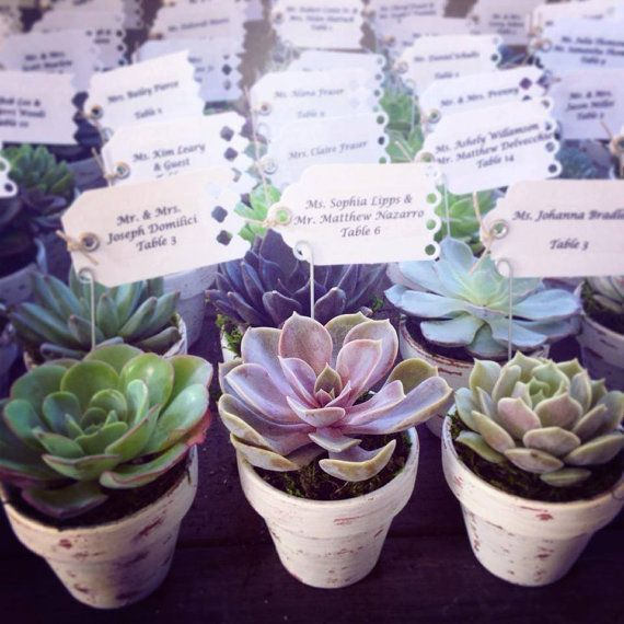succulent wedding favors by VerticalFlora on Etsy