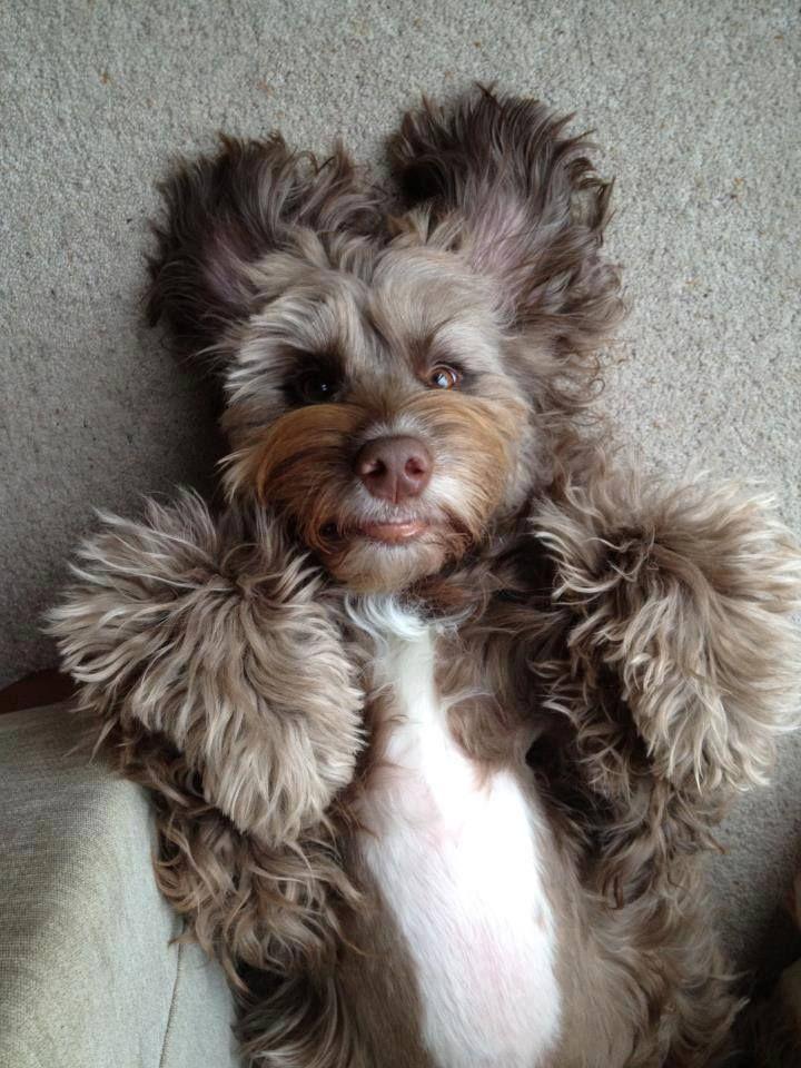 cute, cute, cute!!! I swear I see an old man\'s face in this dog lol.