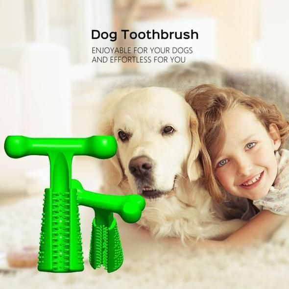 Pictures Of Dogs With A Toothbrush