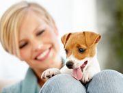Animaute : Garde de chien et garde de chat, visite, promenade d'animaux . Garde d'animaux à domicile sur toute la France