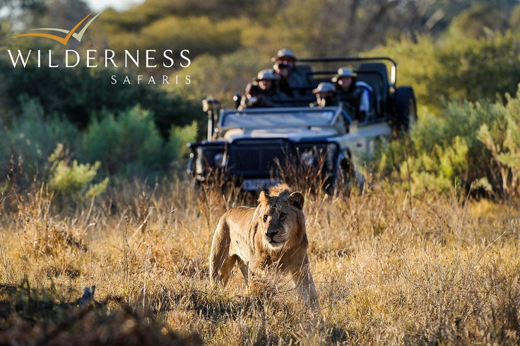 Mombo Camp - Activities at Mombo Camp include morning and afternoon game drives. Open 4x4s provide an excellent vantage for viewing the high concentrations of plains game and all the predators - including the big cats. Lion sightings are frequent. #Safari #Africa #Botswana  #WildernessSafaris
