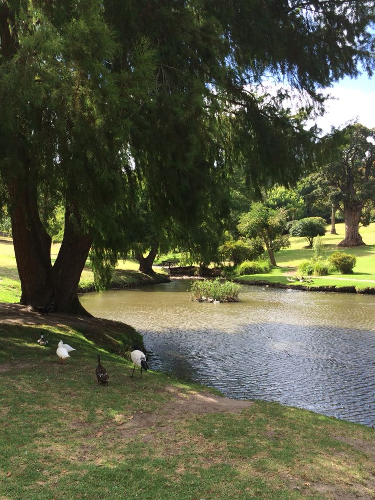 Wynberg Park: still beautiful after all these years.