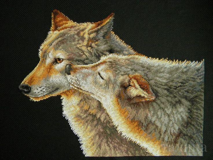 Один из самых популярных наборов для вышивания от #Dimensions 35283  #Wolf #Kiss (Поцелуй волка), 35х27 см., аида 14, счетный крест. Автор процессов вышивки: desechante    ✅Скачать схему: http://stitchlike.ru/kpdz     #волк #волки #вышивка #любовь #stitchlike_dimensions