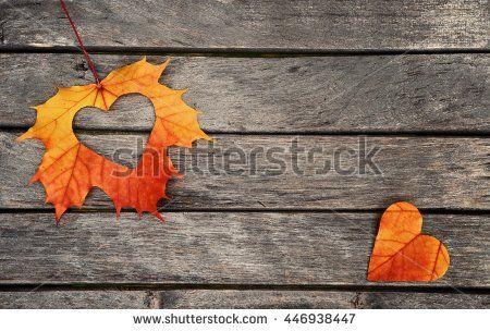 Autumn leaves. Autumn leaves heart. Autumn leaves on wood background. Color autumn leaves. Autumn hearts for love. Autumn leaves on wood. Autumn leaves background. Autumn wood background.