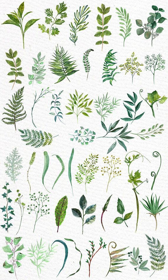 Watercolor Ferns Clipart Watercolor Clip Art Branches Clipart
