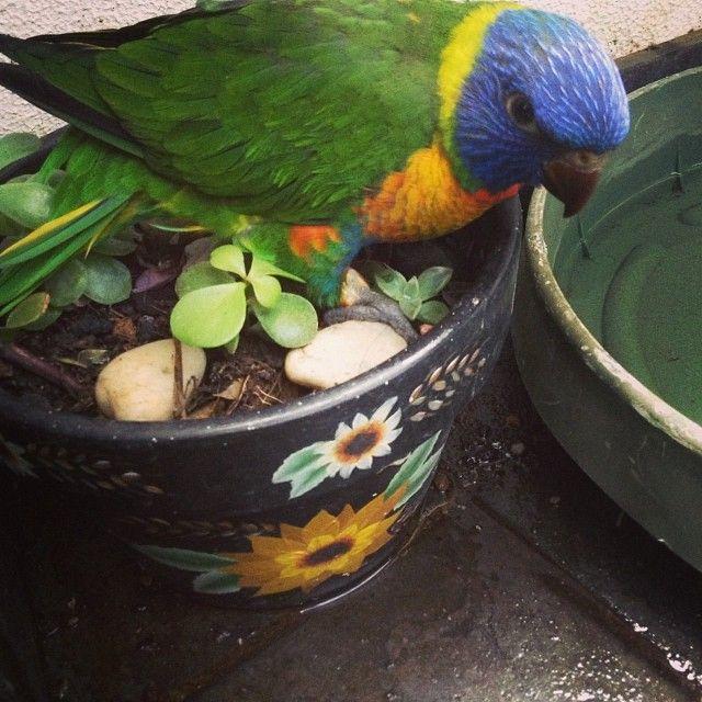 Joy House Productions — #Tbt - My Little Don climbing into pot plants, how...