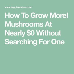 How To Grow Morel Mushrooms At Nearly $0 Without Searching For One