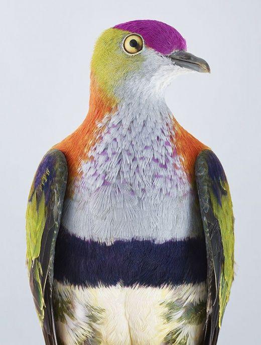 Картинки по запросу Птица