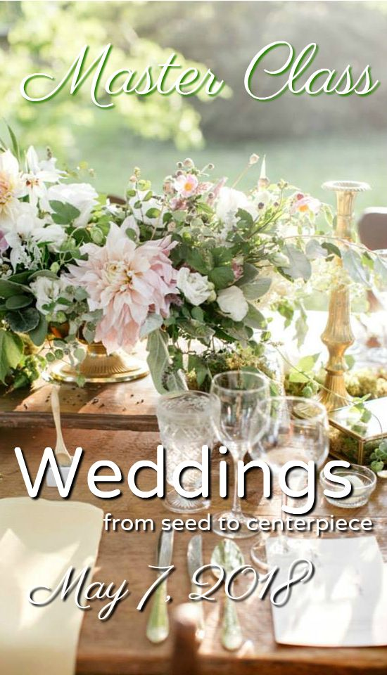 Weddings: From Seed to Centerpiece.  A Master Class experience for floral professionals.   Hosted by Love 'n Fresh Flowers in Philadelphia.  Click for more info and to sign up!   #flowerfarm #farmerflorist #flowerworkshop #floraldesign