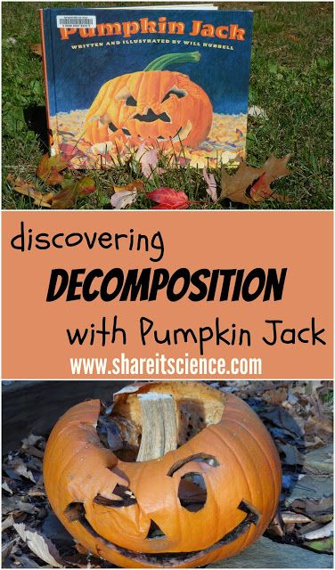 Share it! Science News : Discovering Decomposition with Pumpkin Jack. Activity and free printable observation sheet.