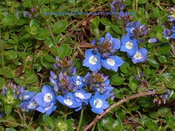The 25 Best Memorial Gardens Ideas On Pinterest Memorial Garden Stones Sympathy Plants And
