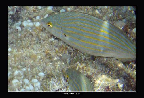 Pubblicate le foto subacquee fatte in Croazia!
