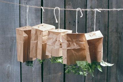Drying herbs, instructions on how to, the paper bags keep the dust off if in an…