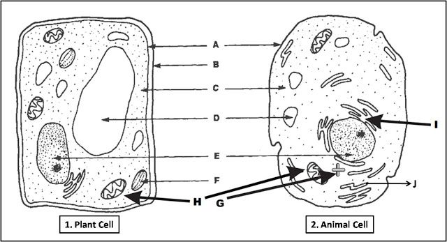 Diagram Quiz On Plant Cell And Animal Cell  Check Your