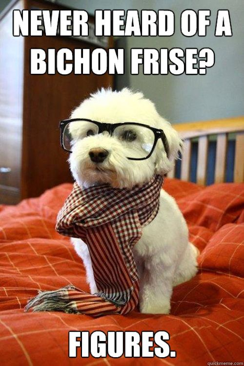 Bichon Frise hipster!  Visit NoahsDogs.com for more information about the breed.