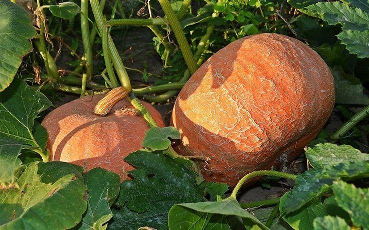 Vaata, kuidas rajada kõrgpeenart, mis soojanõudlikud taimed külmast päästab - Maakodu.ee
