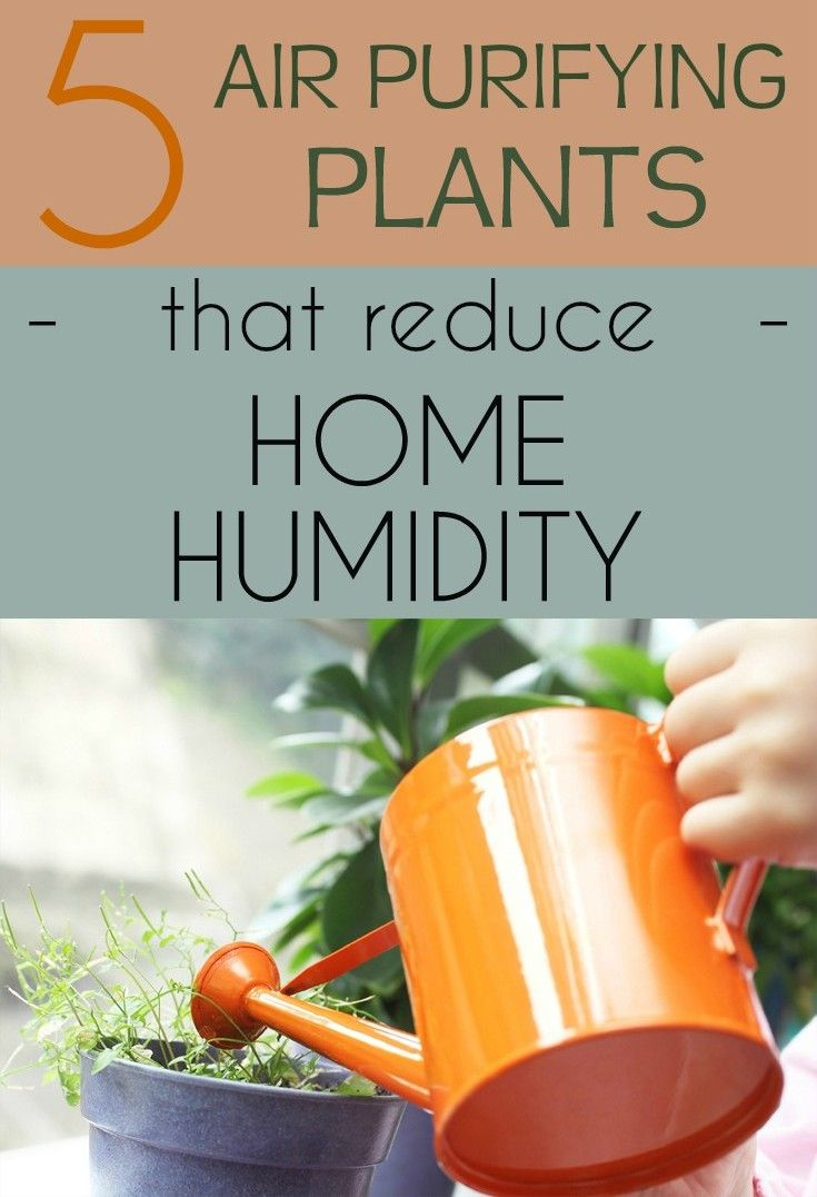 A room or a house with a high humidity environment is conducive to mold and damp, odor and appearance of undesirable pests that may have consequences not only for the furniture and equipment in the house, but for the family health. Even if there are technical and effective means to help you keep it under …