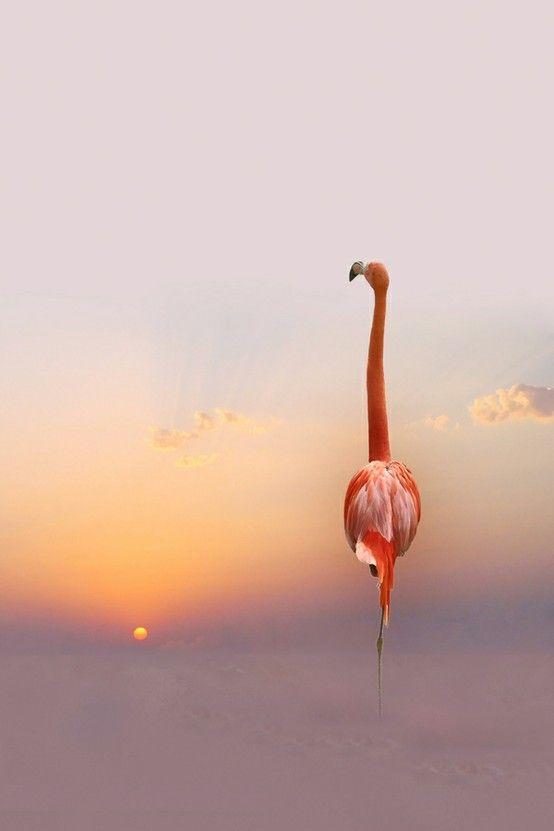 flamingo at sunset