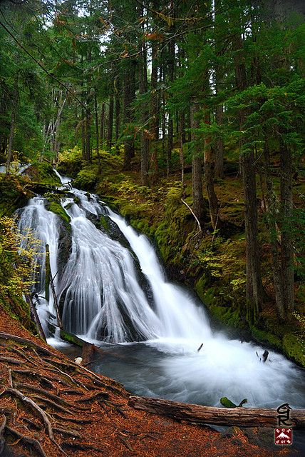 Little Zigzag Falls, between Rhododendron and Government Camp, Oregon near Mount Hood.