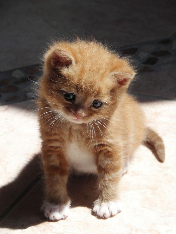 Click The Photo For More Adorable And Cute Cat Videos And Photos Cutecats Cats Kittens Catvideos Cute Baby Animals Cute Cats Kittens Cutest
