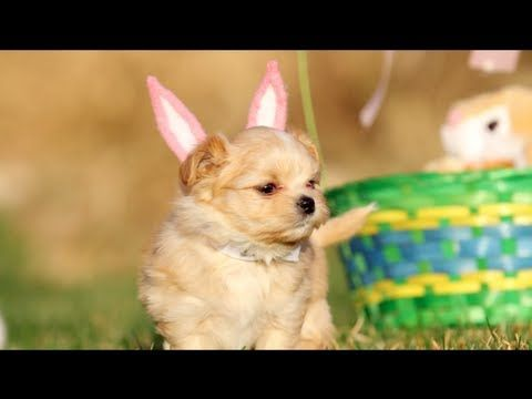 Puppy Easter Video - How Cute......