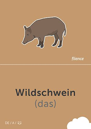 Wildschwein #CardFly #flience #animals #german #education #flashcard #language