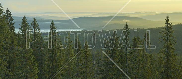 Spruce Tops in Skuleskogen National Park, Sweden - Fototapeter & Tapeter - Photowall