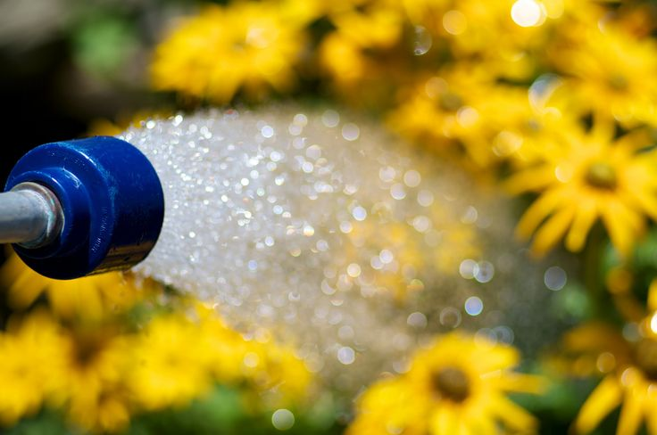 """Many people ponder over how to water a garden. They may struggle over questions such as """"how much water should I give my garden"""" or """"how often should I water a garden."""" This article will help."""