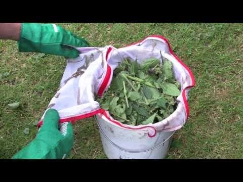 Die Brennnessel als Dünger - ein kleiner Trick bei der Zubereitung - YouTube