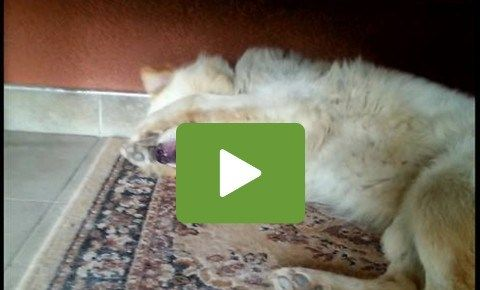 Dog Gives Priceless Reaction To Being Shamed