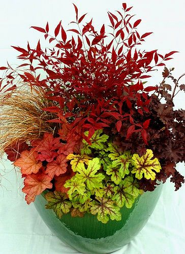 Superb Fall Color: Nandina, Heuchera Blackberry Crisp, Heucherella Alabama  Sunrise, Heuchera Georgia Peach, Bronze Carex Grass For The Front Container