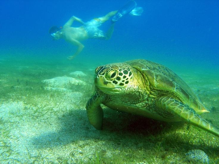Mayotte Island Giant Turtle