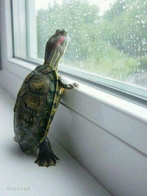 Turtle in window