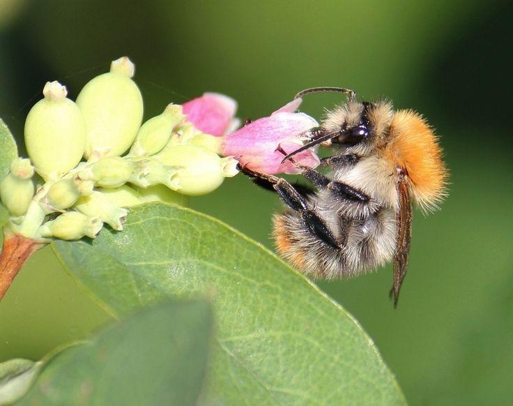 My Photo Gallery - Bee