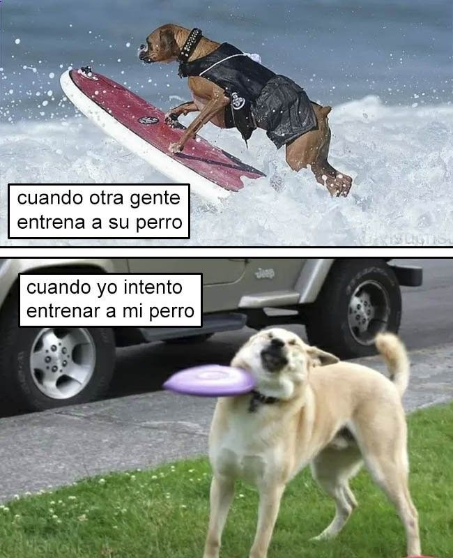 Aburrido Humor Grafico Para Iniciar La Semana Memes Divertidos Memes Memes De Perros Chistosos