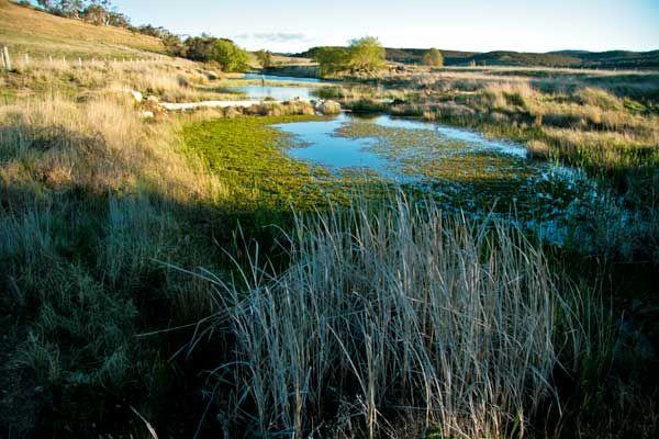 Peter Andrews at Mulloon Creek