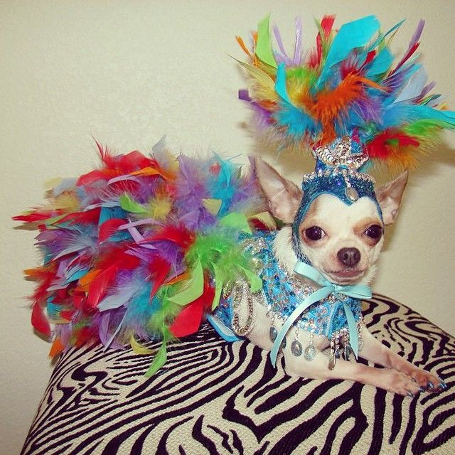 Halloween Pet Contest 2020 Las Vegas Is it #Halloween yet???? #dog #costume #doggies #fancydog