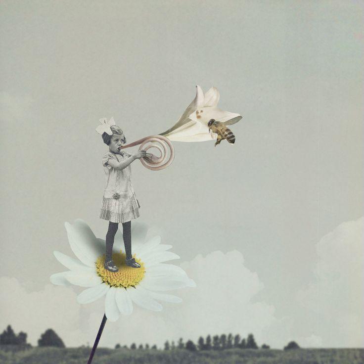 flower horn - q-ta