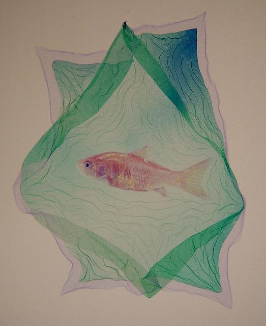 Gold Fish – Polaroid Type 669 emulsion lift on watercolor paper, John Fobes
