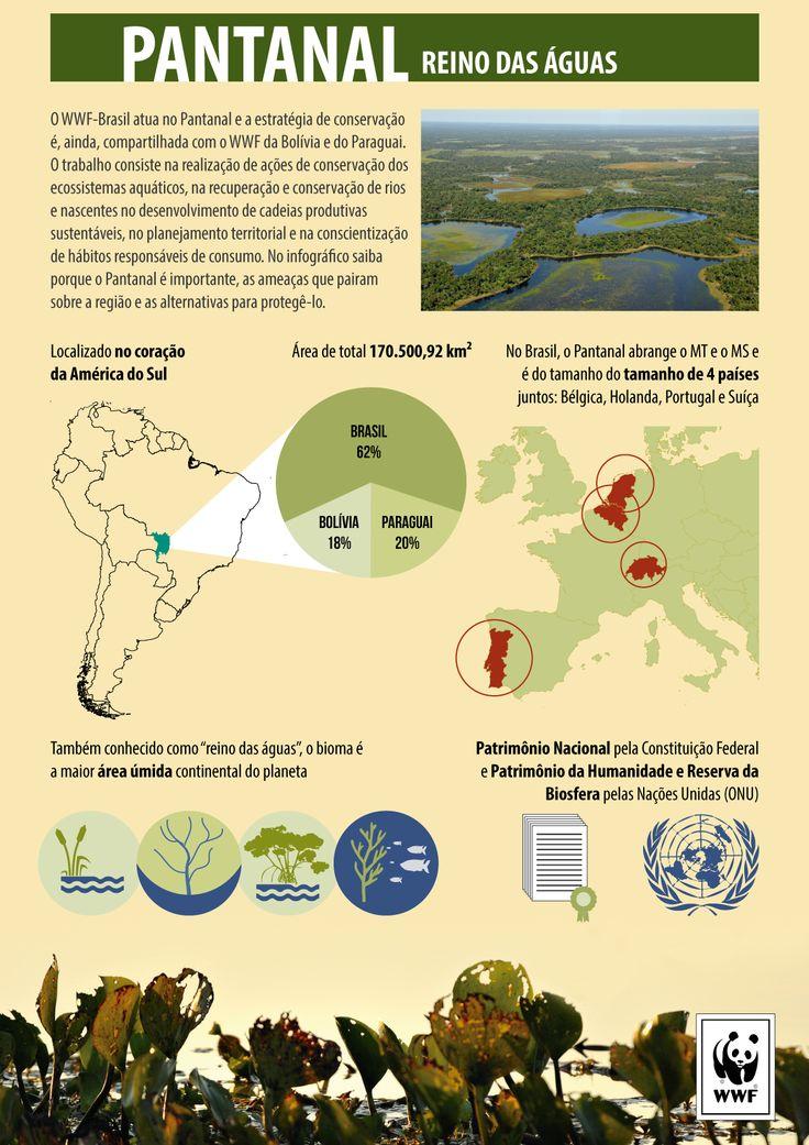 Dia do Pantanal: ações mostram importância de proteger o bioma