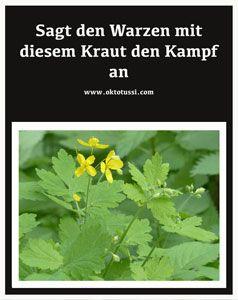 Schöllkraut wächst gern in städtischen Gebieten und es hilft gegen Warzen. #Schöllkraut #Warzen #Naturheilmittel #Kräuterheilkunde