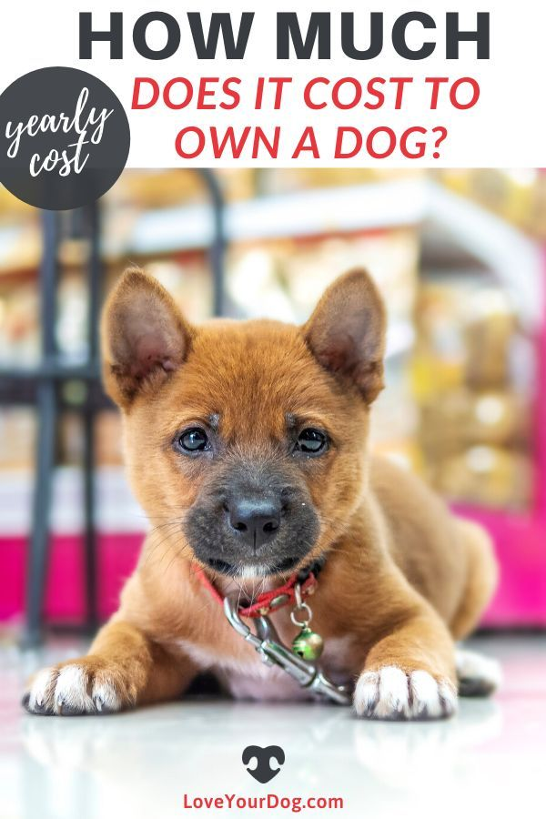 How Much Does It Cost To Own A Dog A Yearly Lifetime Cost