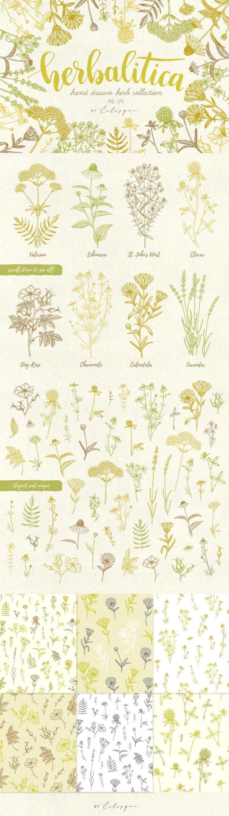 Herbalitica Vintage Plants hand drawn medicinal herb collection, it includes 8 unique sketched plants - Valerian, Echinacea, St. John's Wort, Clover, Dog-Rose, Chamomile, Calendula, Lavender. In order to make designing easier, I have also included 50 carefully separated elements from the original plants.